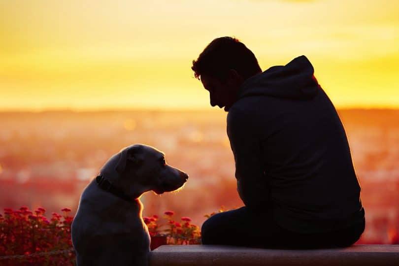 Silhueta de um homem com um cachorro ao lado, no terraço de um prédio, ao pôr do sol.