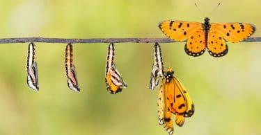 Galho de árvore com borboleta em várias fases