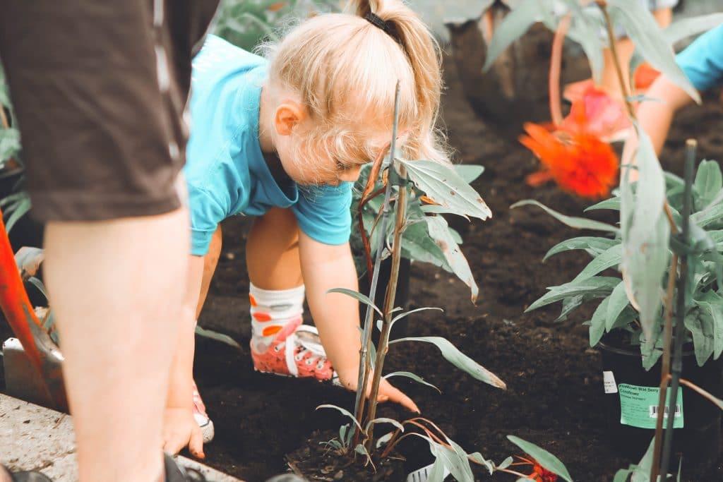 Criança menina fazendo trabalho voluntário ao plantar uma árvore.