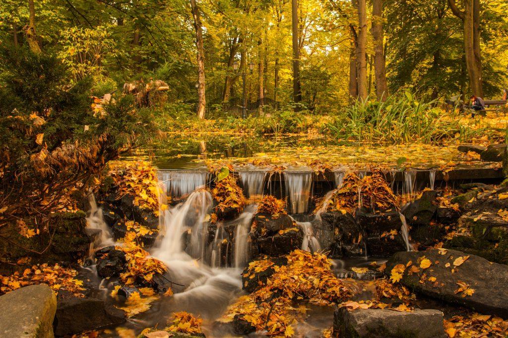 Pequena queda d'água em um rio que cruza uma floresta, durante o outono, com muitas folhas secas caídas.
