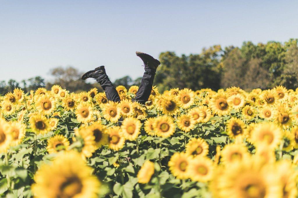 Homem com as pernas para cima em um campo de girassóis.