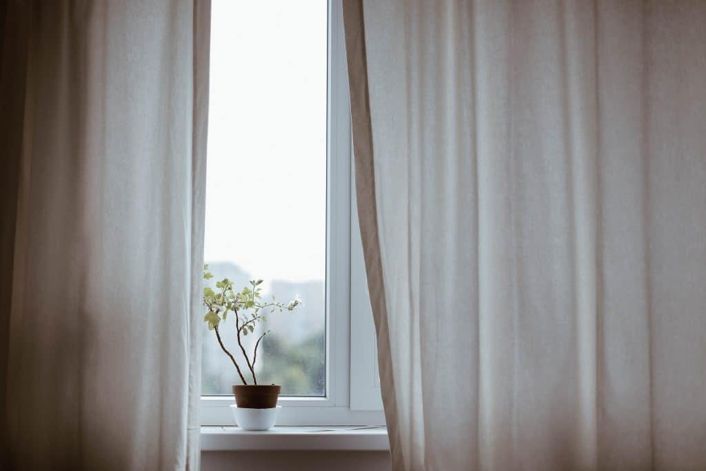 Vaso com planta em uma janela