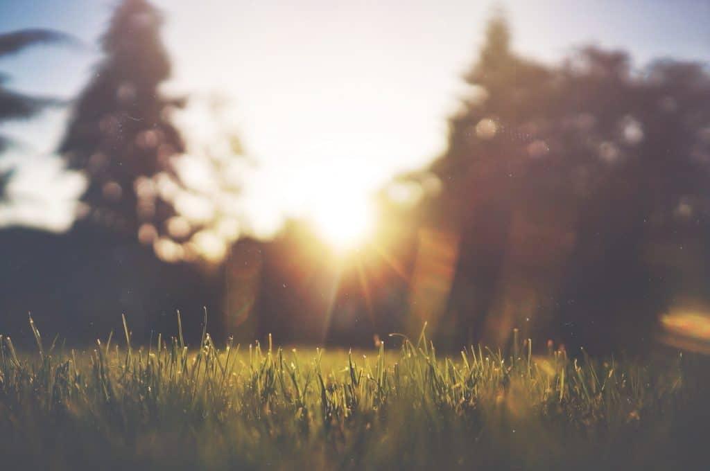 Sol iluminando o gramado