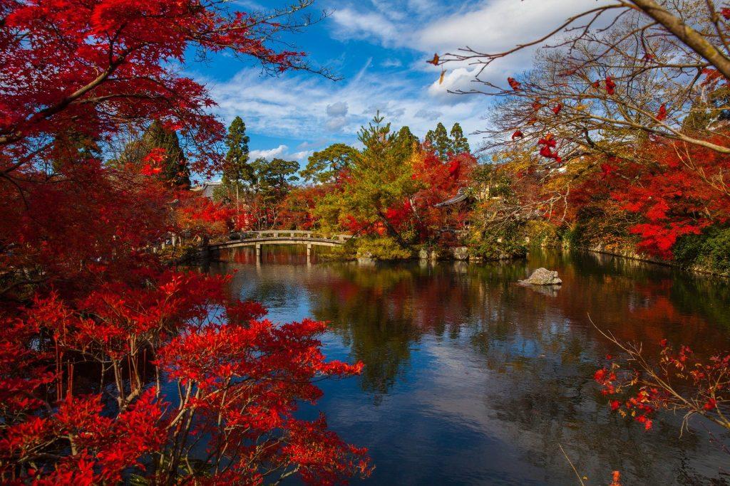 Imagem de um lindo jardim japonês localizado no centro da cidade. Temos muitas árvores com folhagens na cor vermelha sobre um lindo lago.