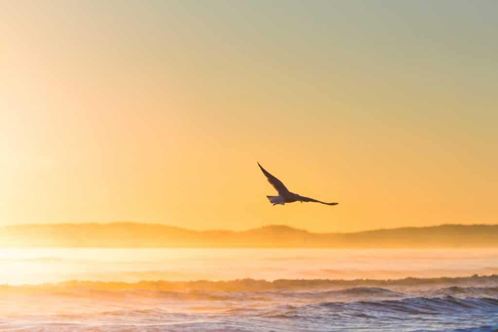 Águia voando sobre o mar em uma praia ao pôr do sol.
