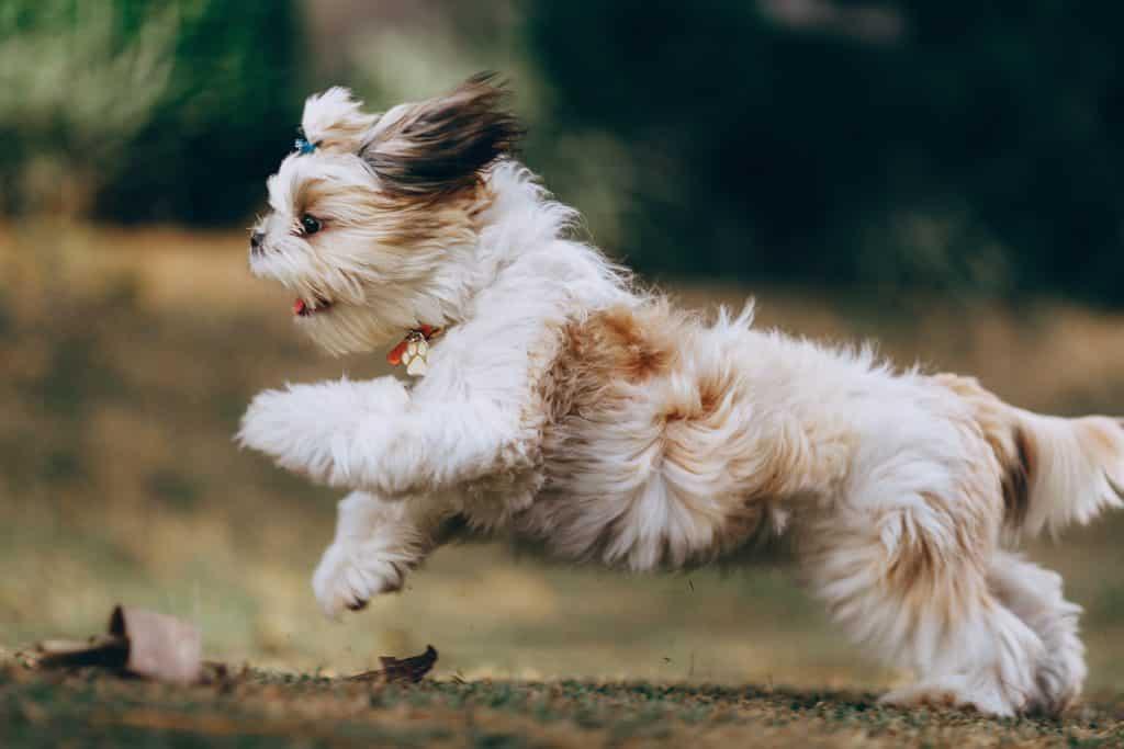 Cachorro filhote correndo com pelos ao vento