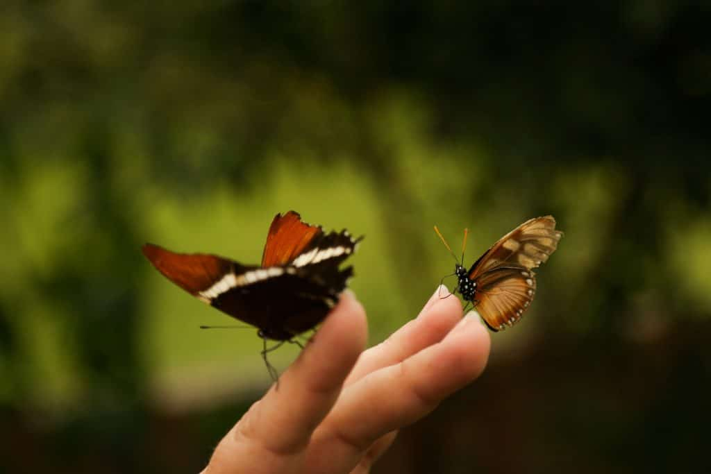 Imagem de duas mariposas que estão pousadas sobre uma mão feminina.