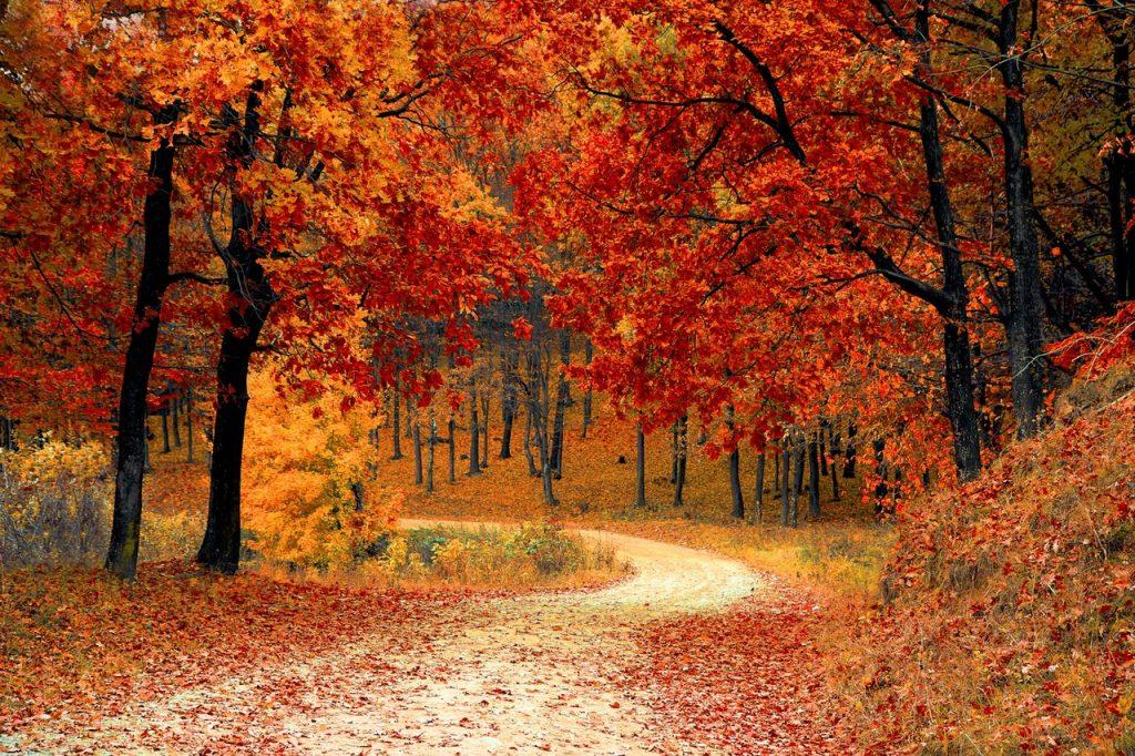Floresta completamente alaranjada com folhas de outono nas copas das árvores e no chão.