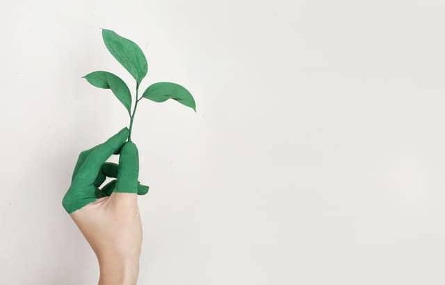 Mão pintada de verde segurando galho de planta