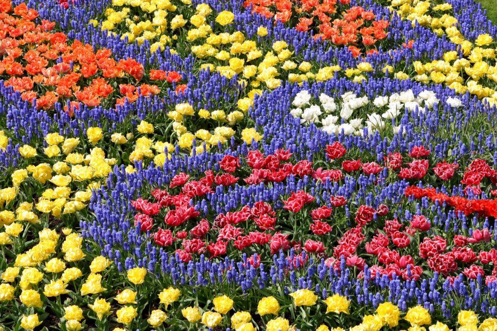 Campo florido de diversas cores, e cada tipo de flor faz um caminho diferente.