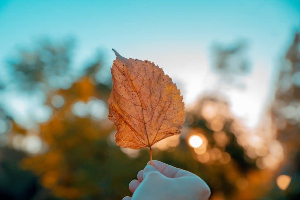 Mão segurando folha de outono em foco