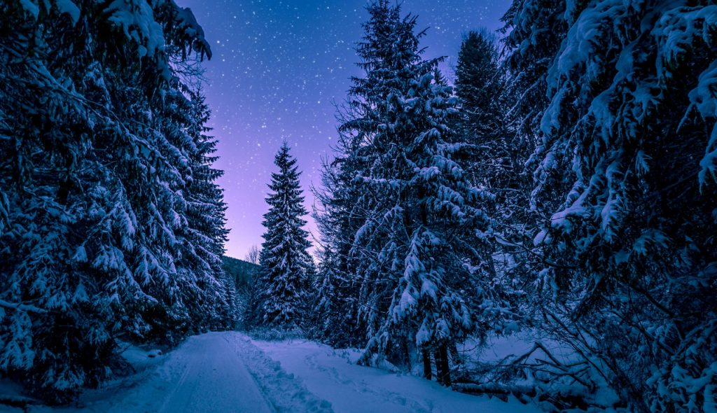 Árvores cobertas com neve e um céu estrelado escurecendo em tons de violeta.