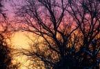 Árvores secas sob o pôr do sol.