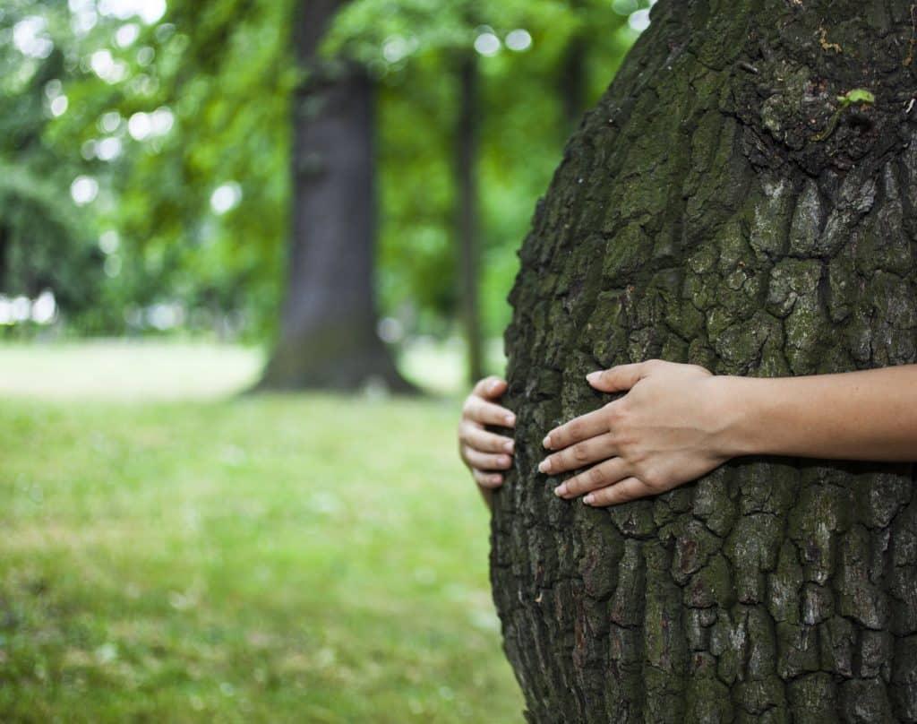 Tronco de árvore inclinado para frente, sendo abraçado por mãos humanas, representando uma barriga grávida.
