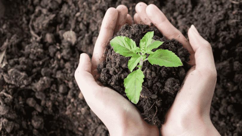 Pessoa segurando uma muda de planta nas mãos
