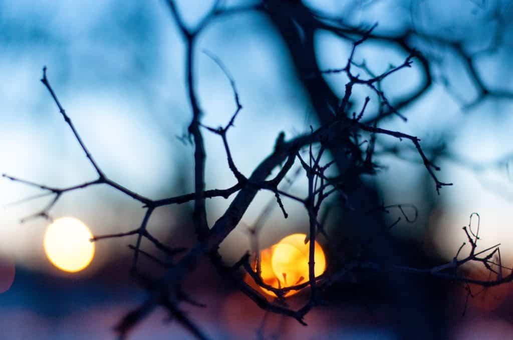 Galho seco de uma árvore à frente da luz do sol se pondo.