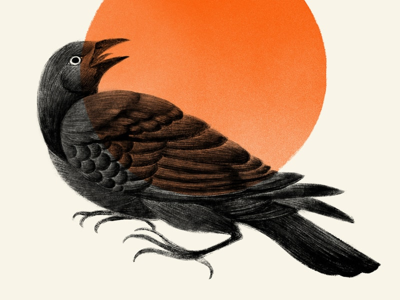 Ilustração de um corvo visto de perfil.