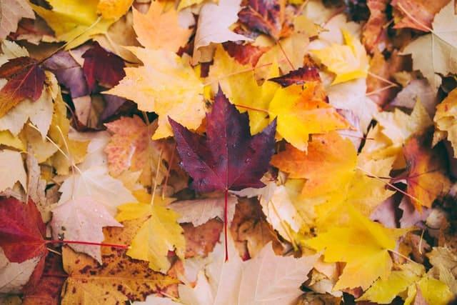 Folhas de outono secas