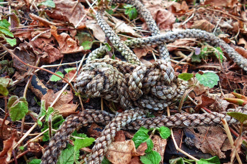 Imagem de um chão coberto de folhas secas e verdes e sobre ele a imagem de uma corda grande com um nó.