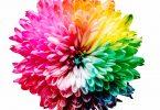 Ilustração de diversas cores