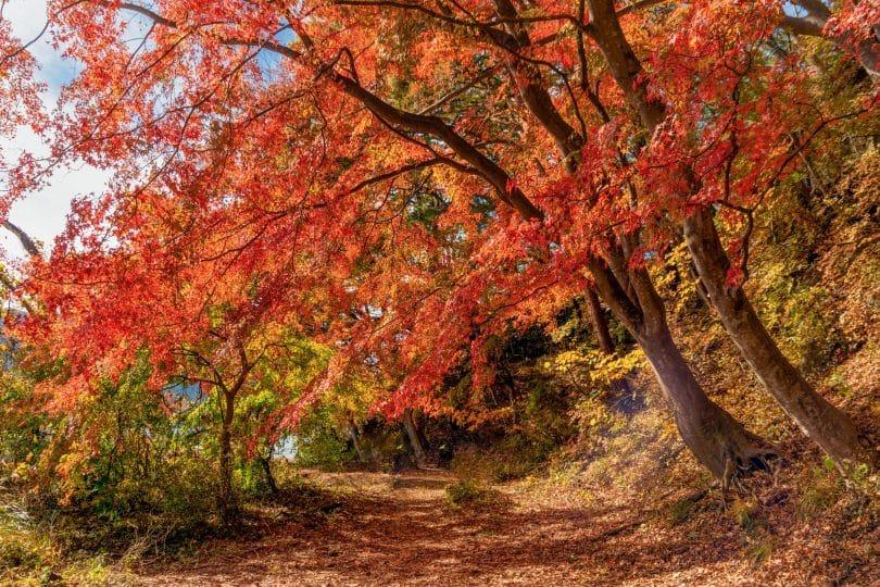 Árvores repletas de folhas outonais.