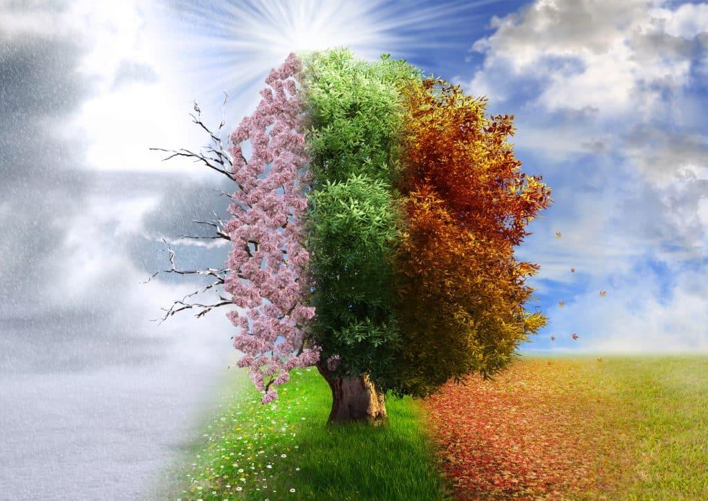 Imagem da evolução das 4 estações do ano refletida na transformação e nas cores da folhagem da árvore.