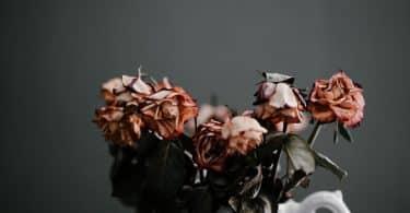 Rosas mortas em um jarro