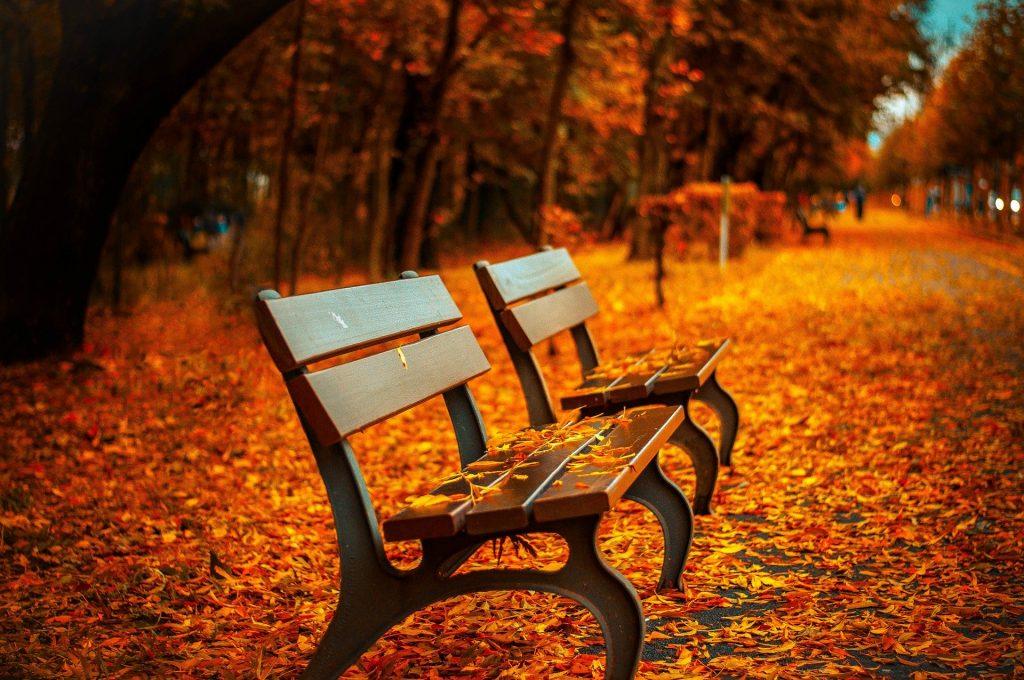 Imagem de dois bancos de madeira em uma praça com as ruas forradas de folhas alaranjadas de outono.