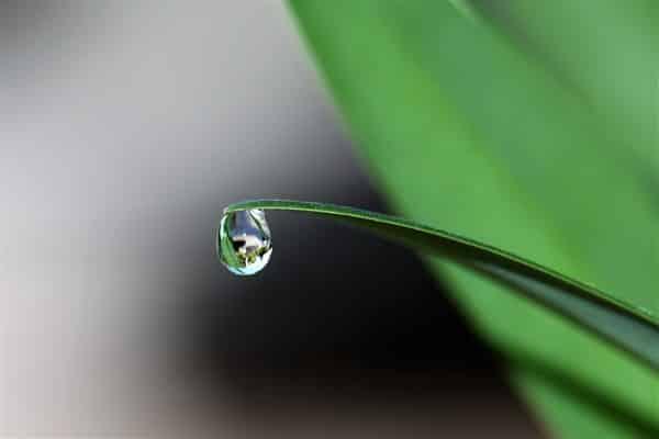 Gota de orvalho caindo da ponta de folha