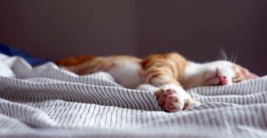 Gatinho dormindo em uma cama
