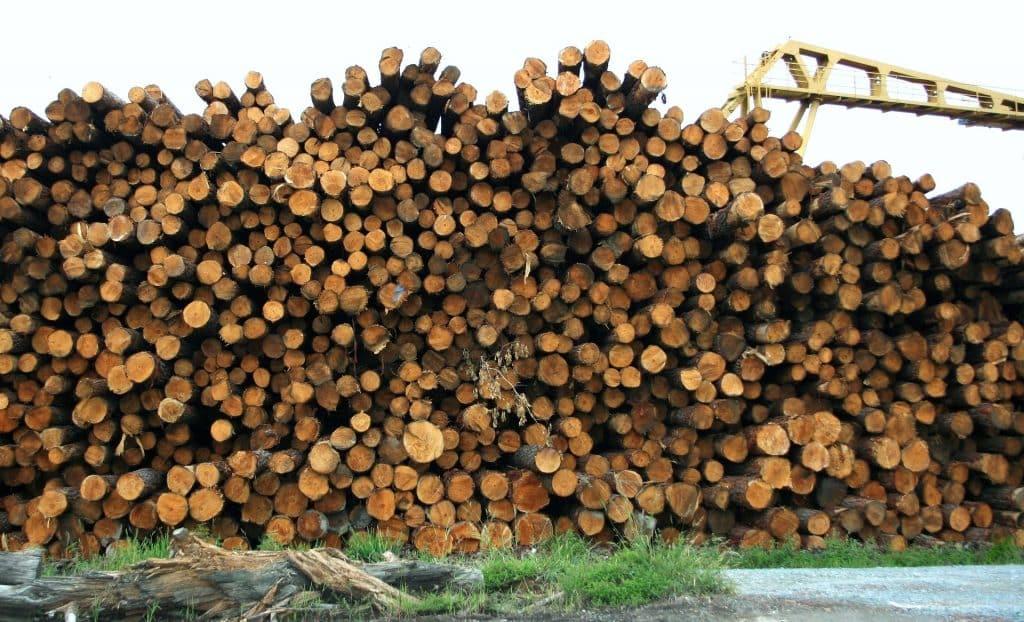 Imagem de vários troncos de madeira prontos para serem reciclados.