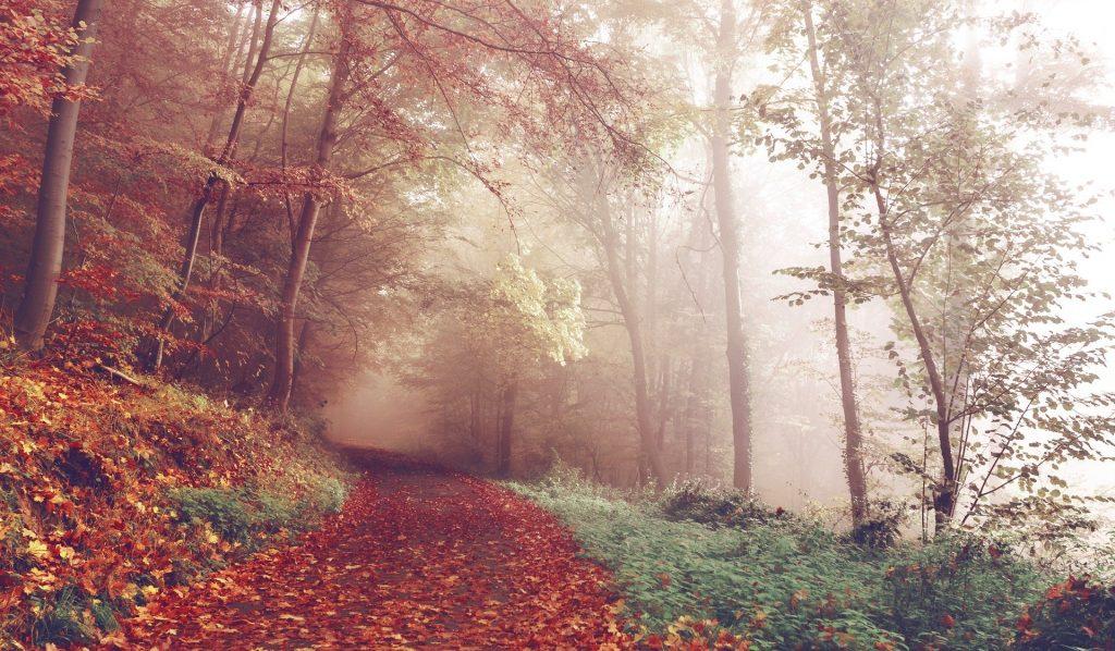 Imagem de uma estrada entre a floresta. A estrada está forrada com lindas folhas de outono na cor alaranjada.