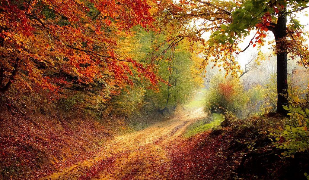 Imagem de uma estrada no centro de uma floresta em pleno outono.