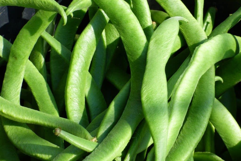Imagem de várias vagens (legumes) e a sua relação com o intestino,