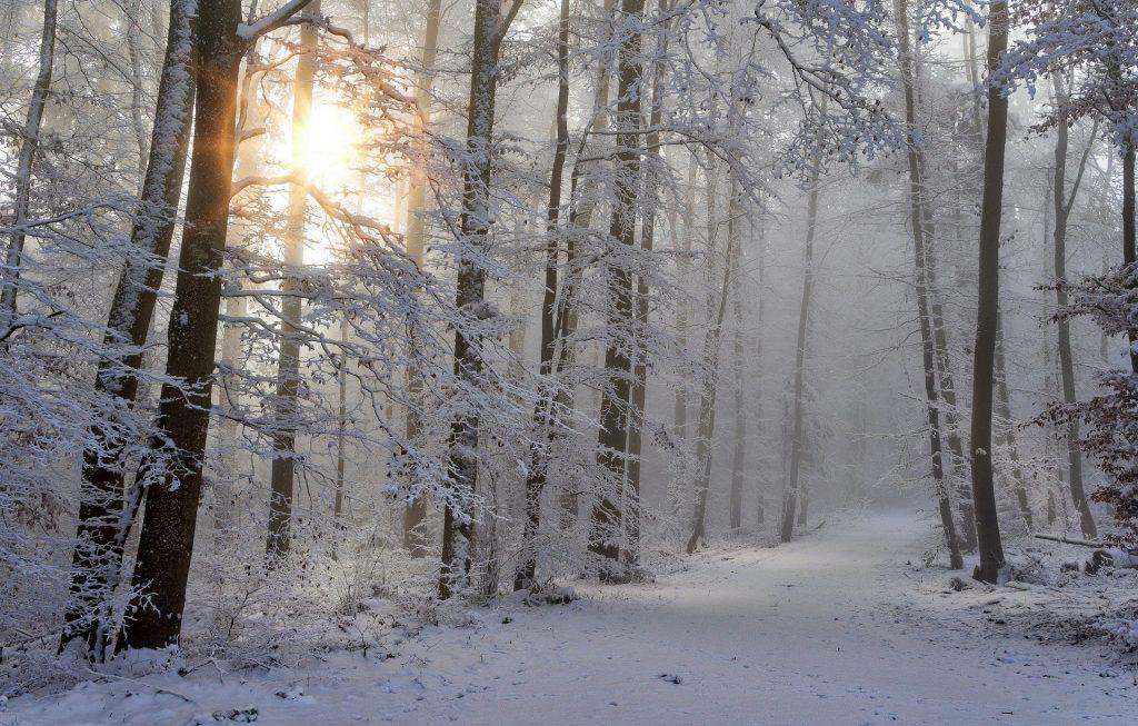 Imagem de uma floresta repleta de pinheiros em ambos os lados. Tudo está coberto com gelo e neve. Ao fundo a imagem do nascer do sol.
