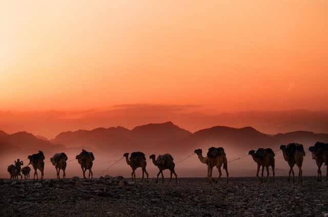 Camelos andando no deserto