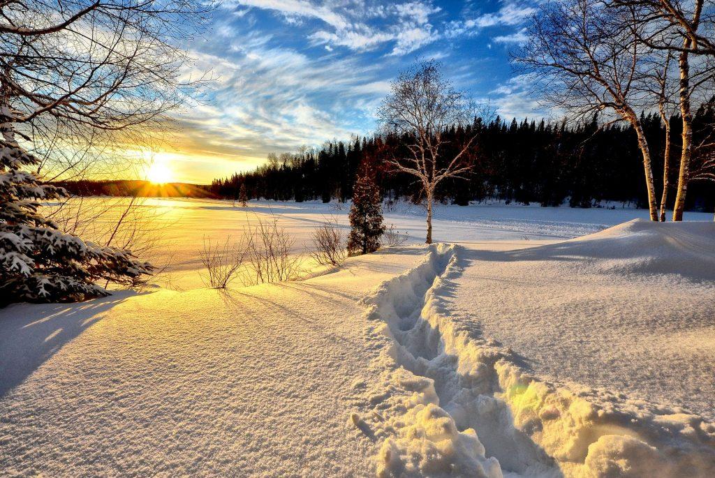 Imagem de uma floresta coberta de neve. Ao lado a plantação de vários pinheiros e ao fundo o nascer do sol.