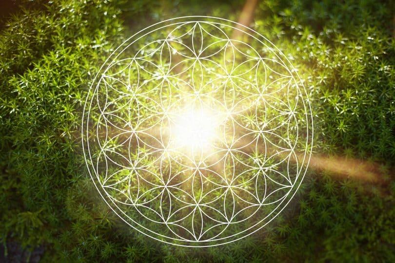 Luz atravessando folhas de arbustos juntas a uma figura de uma mandala.