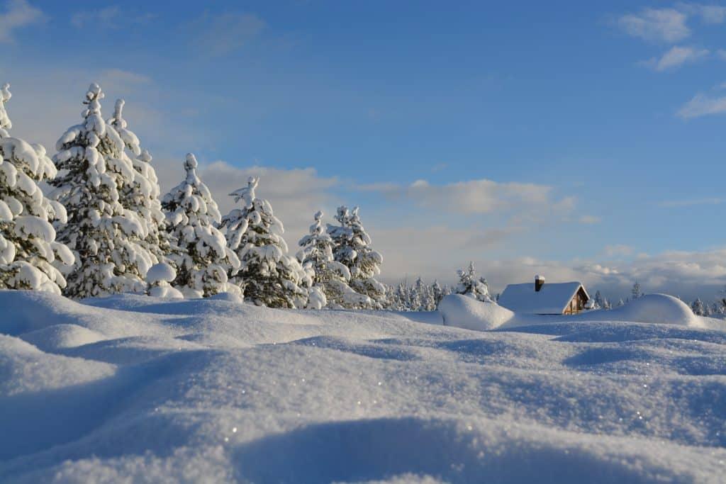 Neve em árvores, chão e em uma casinha