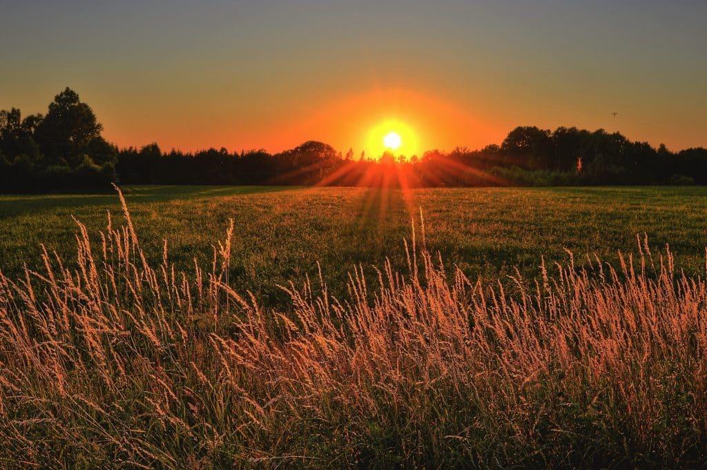 Sol nascendo no horizonte de um campo.