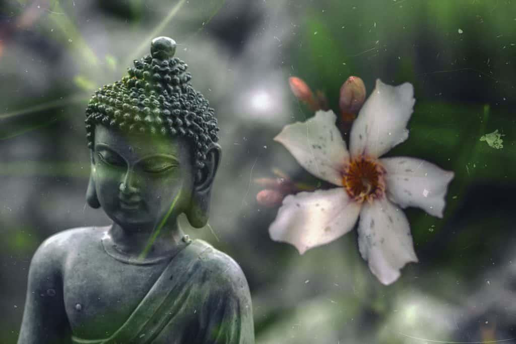 Imagem da estátua do Buda e ao lado dela uma flor de lótus na cor branca. Buda está agradecendo e fazendo a oração do ho'oponopono.