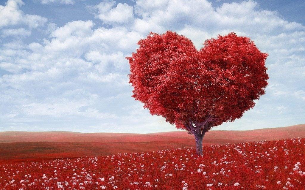 Imagem de uma linda e gigante árvore desenha em formato de coração vermelho, representando a reciprocidade.
