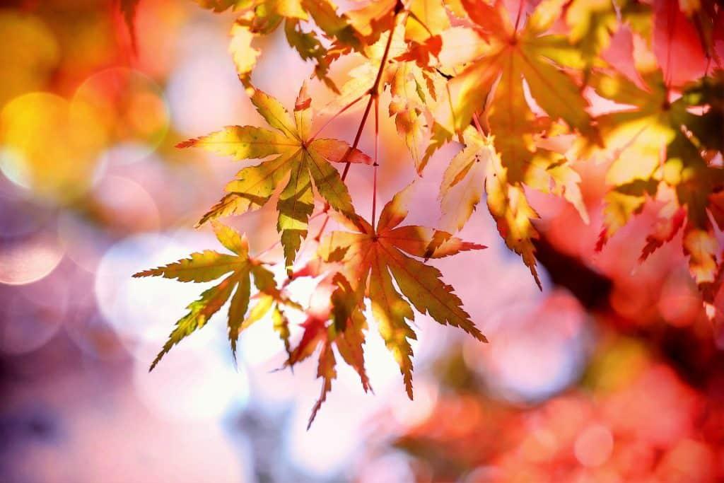 Imagem avermelhada de uma árvore com as folhas de outono.