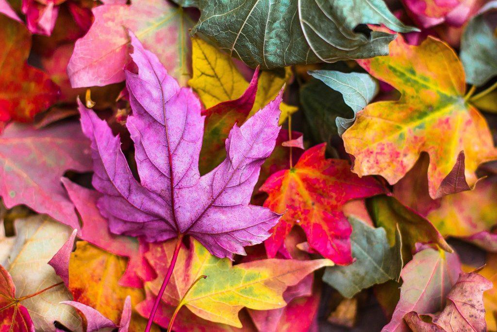 Imagem de folhas de outono caídas do chão. São várias folhas e todas de uma cor diferente.