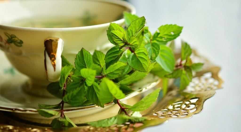 Imagem de chá para dor de estômago e fígado feito com espinheira santa e hortelã. O chá está sendo servido em uma linda xícara de porcelana bege.