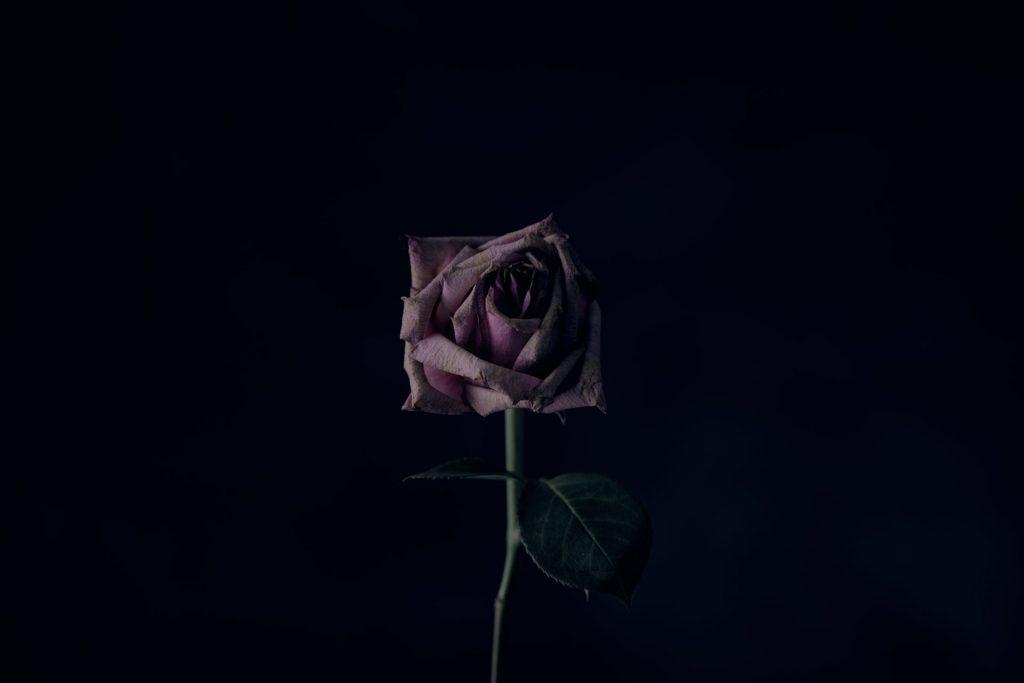 Rosa seca, mas com as pétalas ainda em seus devidos lugares.