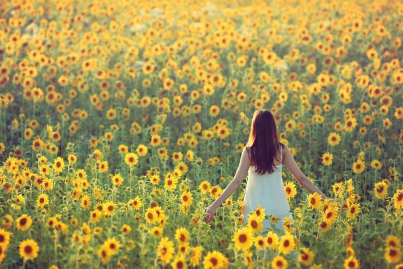 Mulher em pé em campo com flores amarelas