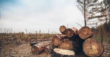 Árvores cortadas em um ambiente aberto, durante o dia.