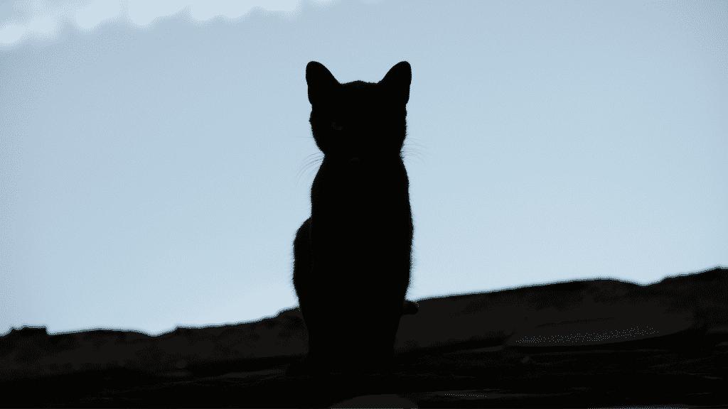 Silhueta de pequeno gato preto