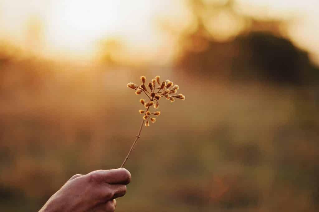Mão de alguém segurando um ramo de flor em um campo aberto